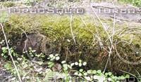Moss 01.jpg