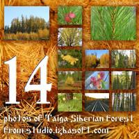 Siberian_forest_from_Izbasoft_Studio_01.zip