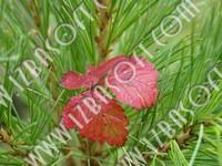 Siberian_forest_P2222461orig.zip