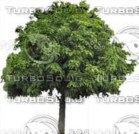 Tree0001.ZIP