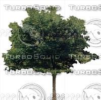 Tree0007.ZIP