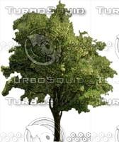 Tree0008.ZIP