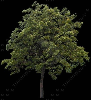 Tree0021.jpg