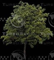 Tree0021.ZIP