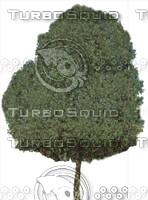 Tree0024.ZIP