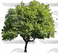 Tree0029.ZIP
