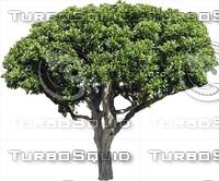 Tree0030.ZIP