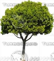 Tree0031.ZIP