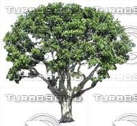 Tree0033.ZIP