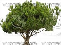 Tree0037.ZIP