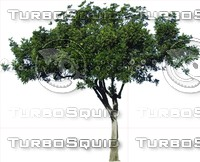 Tree0041.ZIP