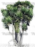 Tree0043.ZIP
