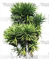 Tree0044.ZIP