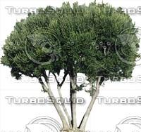 Tree0045.ZIP