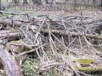 Wood Pile 01.jpg