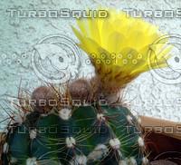 Yellow Cactus Flower.JPG