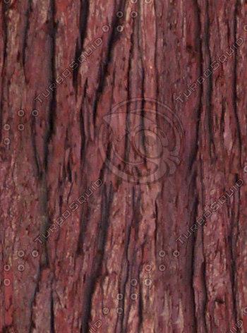 bark5.jpg