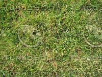 lawn_grass1.jpg