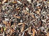 leaves006.jpg