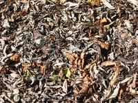 leaves007.jpg