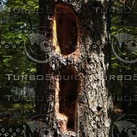 macn301_treeholes.jpg