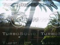 palmswhiledriving.jpg