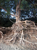 rootseroded_IMG_4490a.jpg