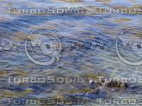 seaweed_bed.JPG