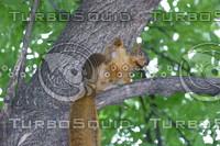 squirrel_flasher.jpg