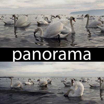 swans_thumbnail3.jpg