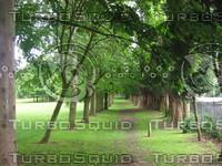 tree026.jpg