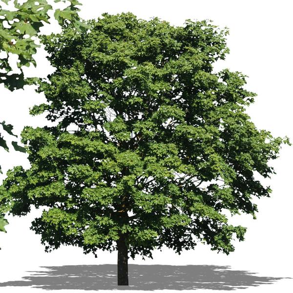 tree3p.jpg