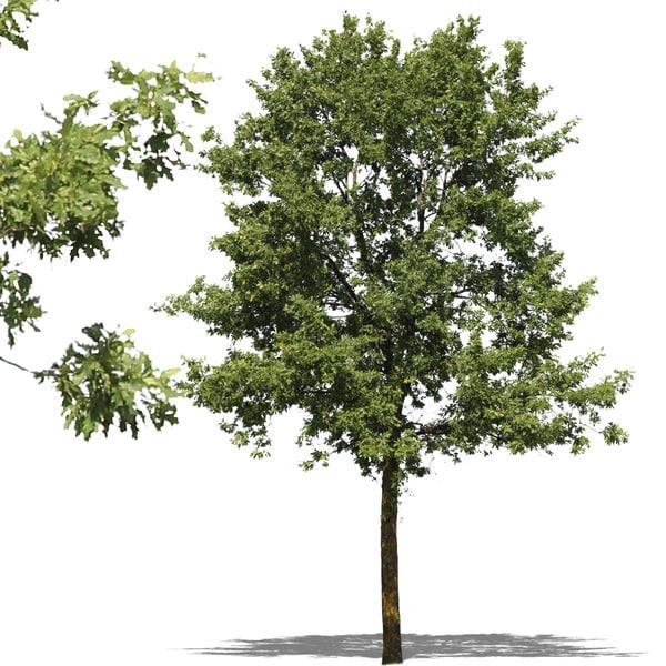 tree5p.jpg