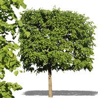 tree7.psd