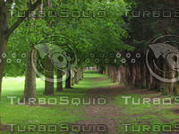 trees028.jpg