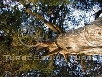 wood0253.jpg