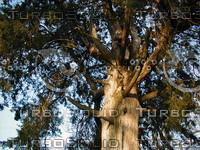 wood0254.jpg