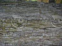 wood0256.jpg