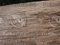 wood0269.jpg