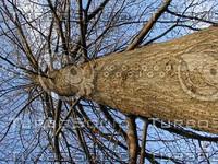 wood0322.jpg