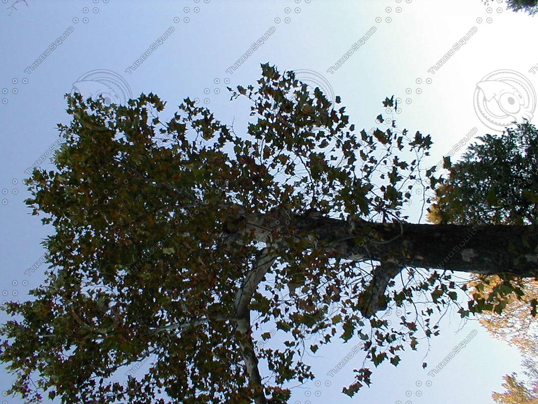wood0593.jpg