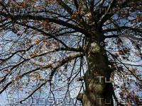 wood0688.jpg
