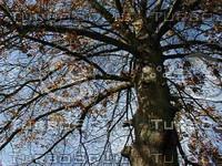 wood0689.jpg
