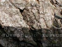 wood0757.jpg