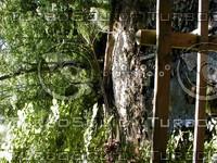 wood0792.jpg