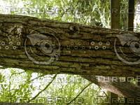 wood0797.jpg