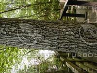 wood0801.jpg