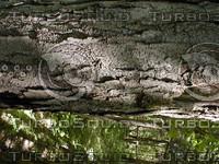 wood0807.jpg