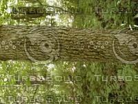 wood0809.jpg