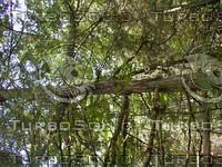 wood0810.jpg